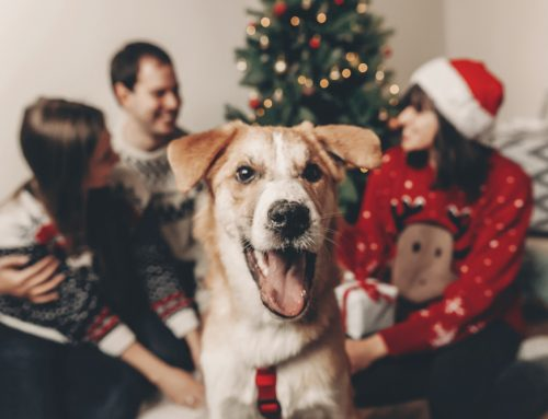 5 Holiday-Related Veterinary Emergencies