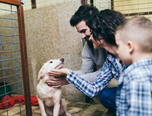 New Year, New Pet: 5 Things to Consider Before Adopting a Pet