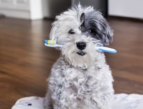 5 Common Dental Health Problems in Pets