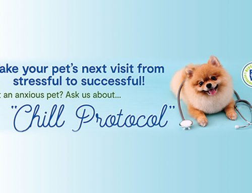 Introducing Chill Protocol at RRVH